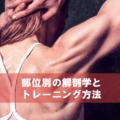 主な筋肉の部位別解剖学入門とトレーニング一覧